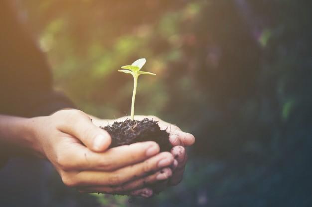 gojenje rastlin v zaprtih prostorih